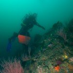 diving on a outer reef off Anacapa