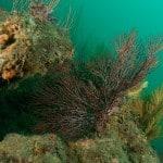 coastal offshore reefs