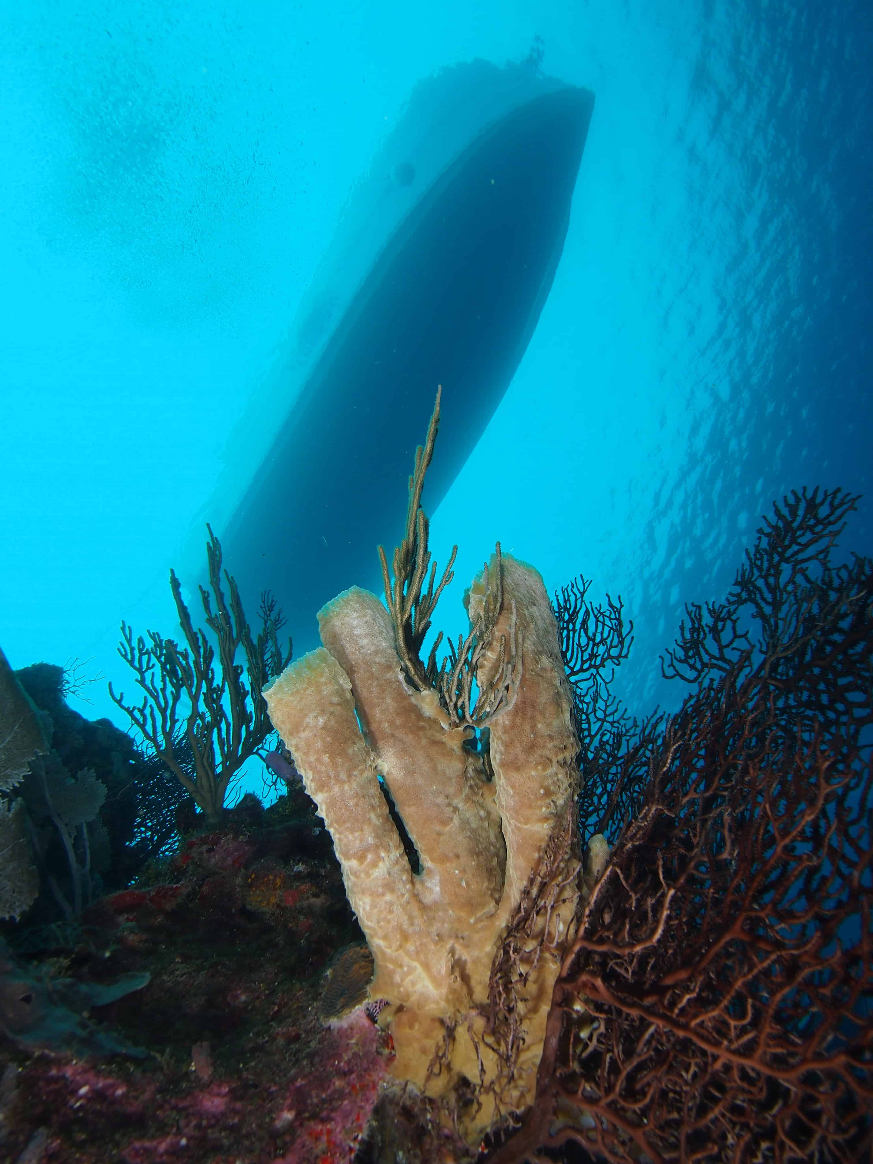 sponges in Roatan on the Channel Islands Dive Adventures dive vacation