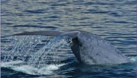 Gary Whale & Sea Life Cruise-March 5th