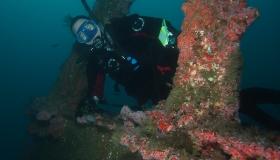 Wrecks & Reefs-Dec. 17th