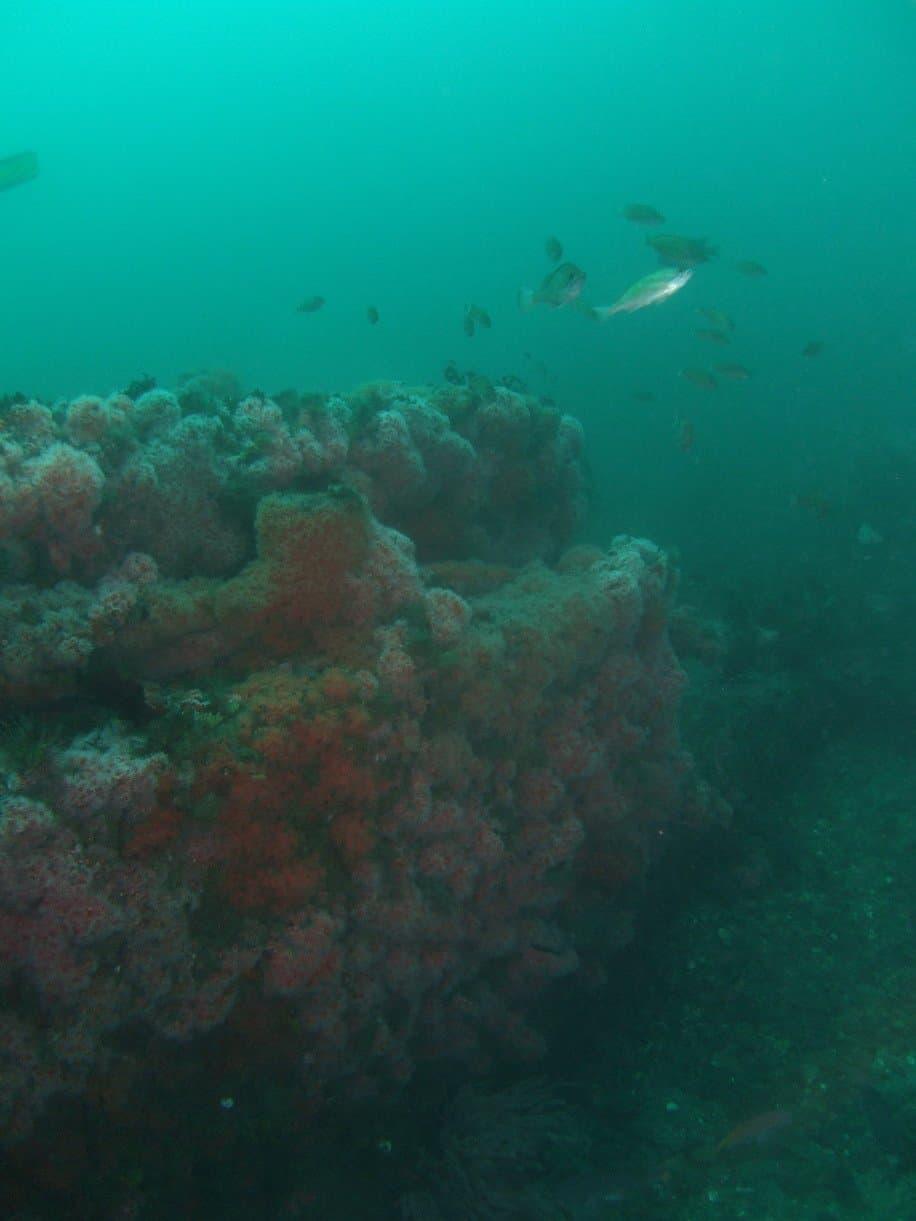 kelpcutter-kopco-star-wreck