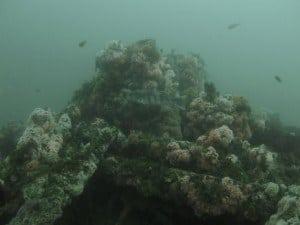 kelpcutter-kopco-star