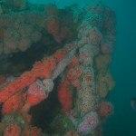 kopco star kelpcutter wreck