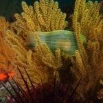 coastal-nicholas-canyon-reef-eggcase