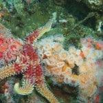 coastal dive