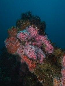 avalon-wreck-palos-verdes