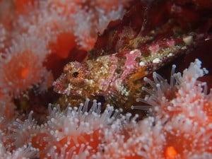 cute fish at san miguel island