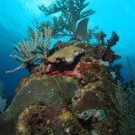 roatan turquoise bay