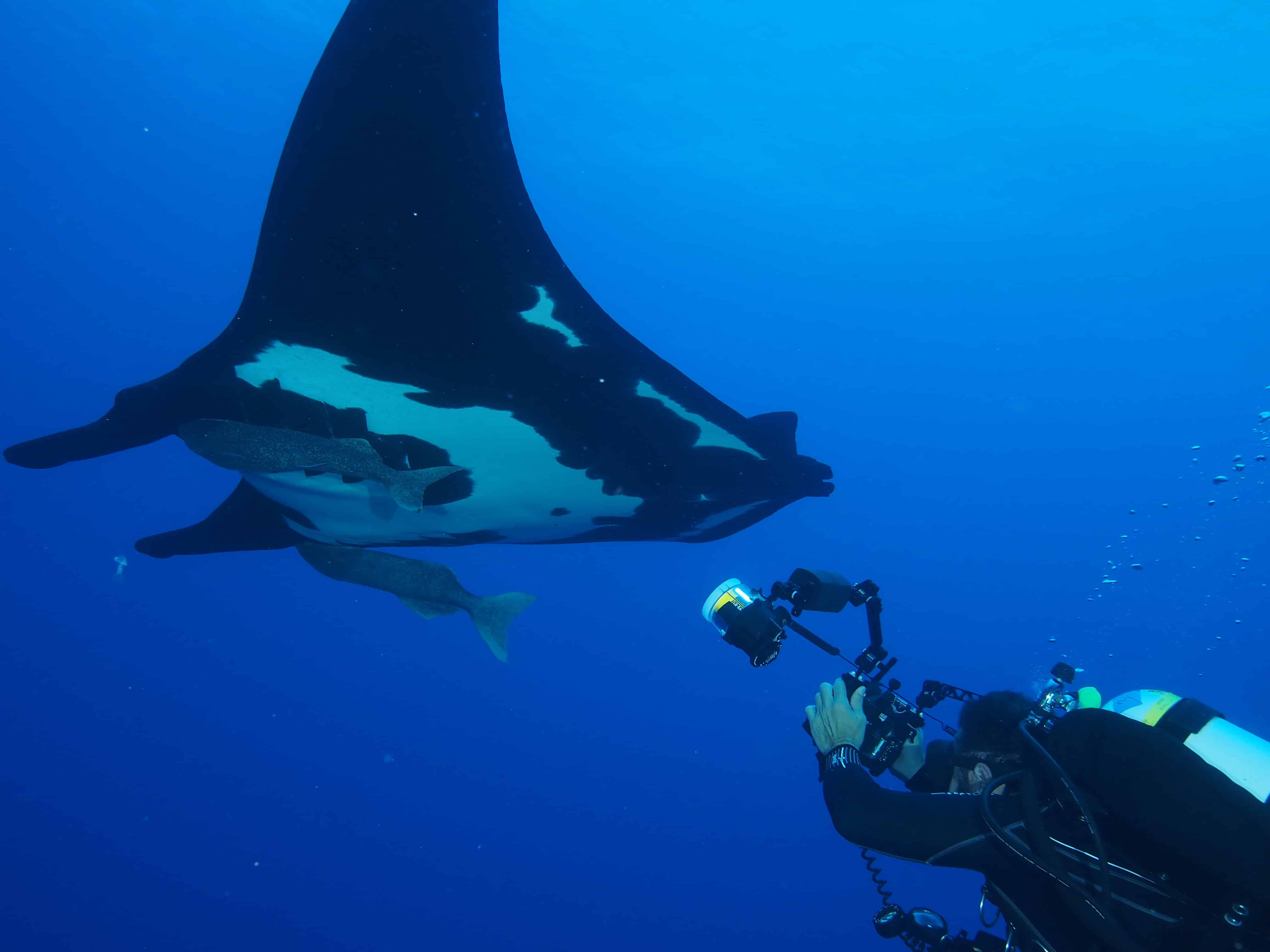 Giant mantas at Roca Partida on our Channel Islands Dive adventures Socorro trip aboard the Nautilus Explorer