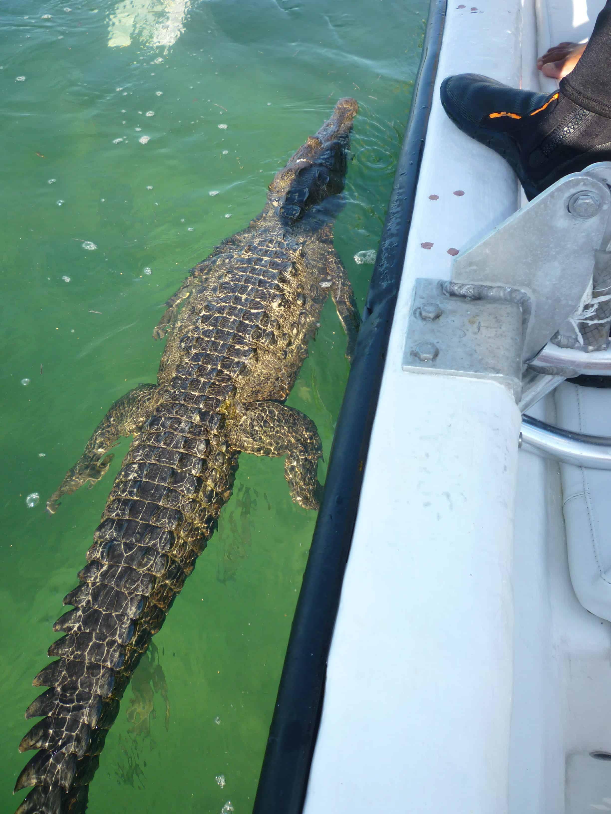 crocs while diving in cuba