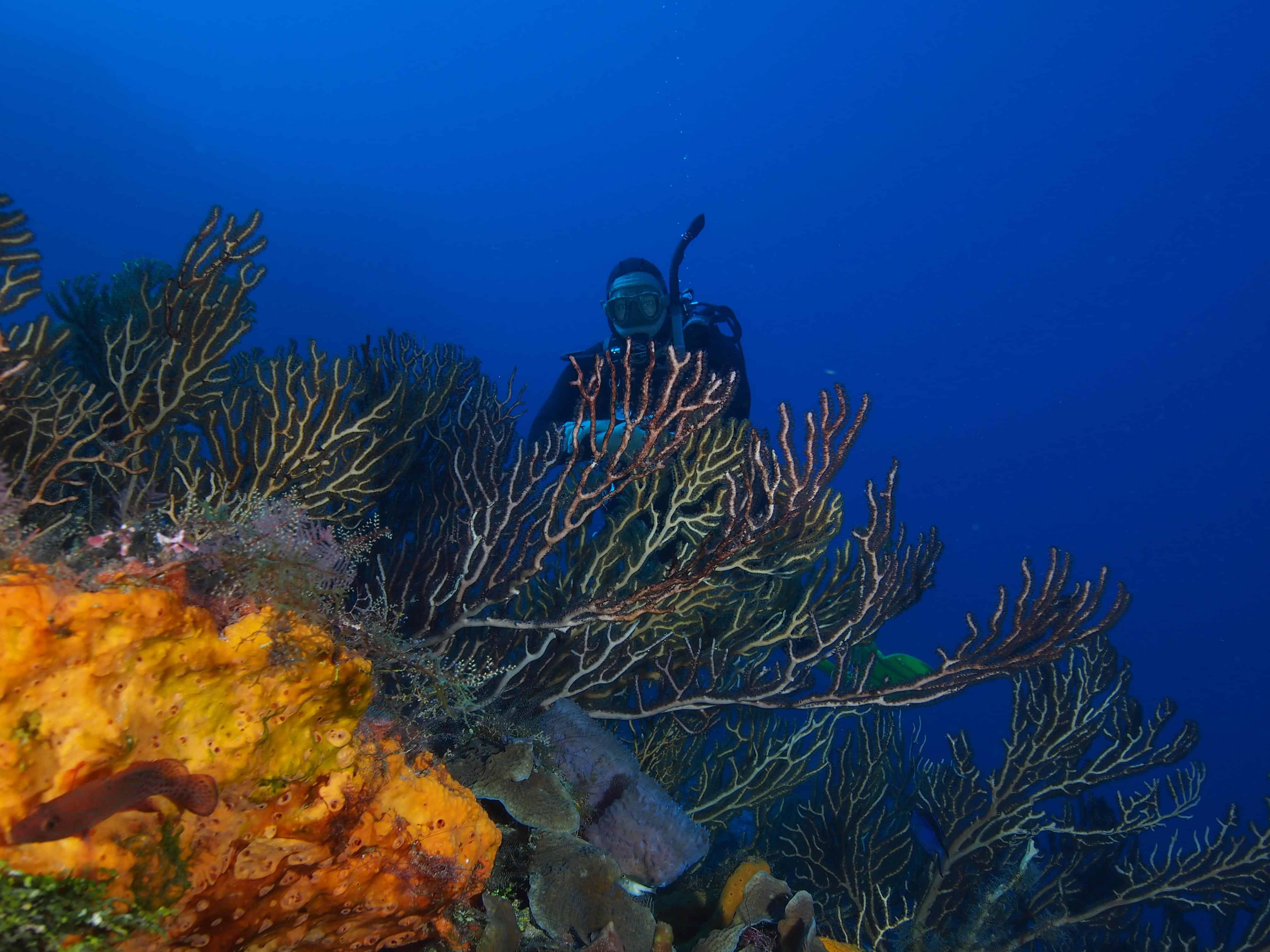 reef in cozumel