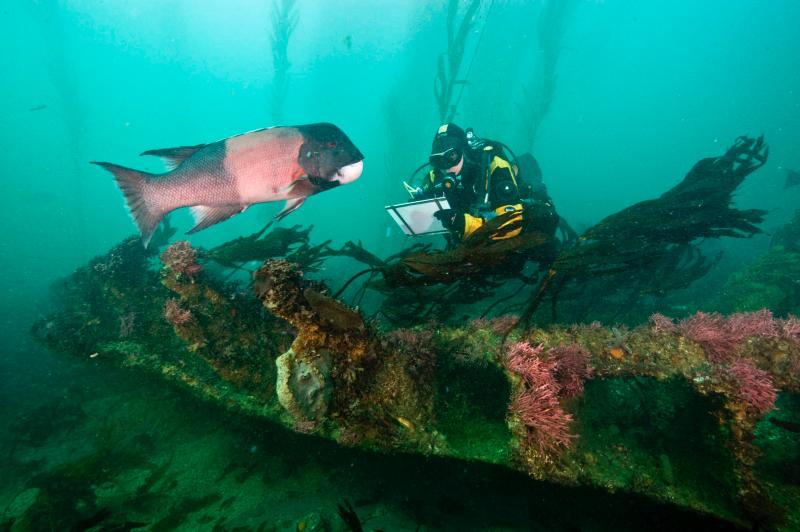 Hasil gambar untuk channel scuba diving