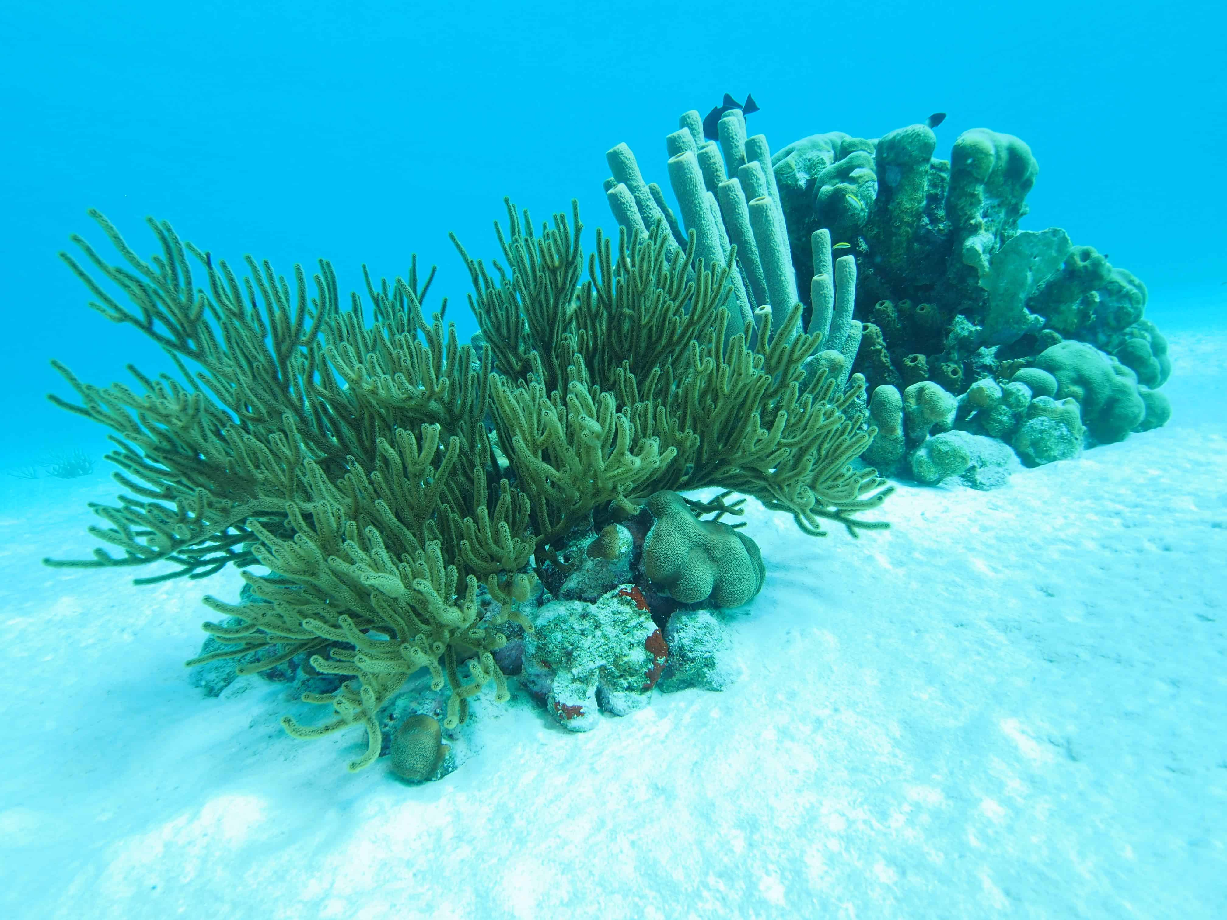 reef off bonaire