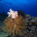 underwater reef in the solomon islands