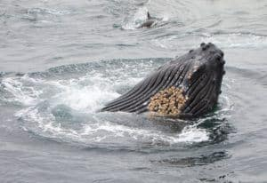 monterey-whale-watching