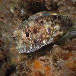 blenny at blue-herron-bridge