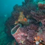 breakers reef in florida